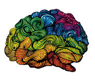 Απεικόνιση ιδέας εγκεφάλου Διανυσματική έννοια Doodle για τον ανθρώπινο εγκέφαλο Δημιουργική απεικόνιση με το χρωματισμένο εγκέφα στοκ φωτογραφίες