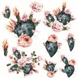 Απεικόνιση κάκτων με τα ρόδινα λουλούδια Ρεαλιστικό βοτανικό backg Στοκ φωτογραφίες με δικαίωμα ελεύθερης χρήσης