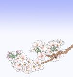 απεικόνιση κερασιών ανθών Στοκ Φωτογραφίες