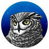 Απεικόνιση κουκουβαγιών Απεικόνιση μιας κουκουβάγιας τη νύχτα ελεύθερη απεικόνιση δικαιώματος