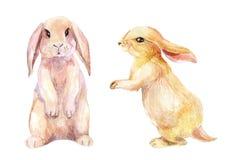 Απεικόνιση κουνελιών Watercolor Στοκ Εικόνες