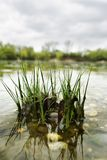 απεικόνιση λιμνών χλόης Στοκ εικόνα με δικαίωμα ελεύθερης χρήσης