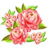 Απεικόνιση λουλουδιών Camelia διανυσματική απεικόνιση