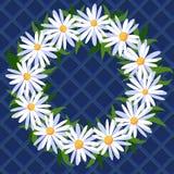 Απεικόνιση με ένα πλαίσιο των chamomiles Στοκ Εικόνα