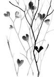 Απεικόνιση μελανιού με τους κλάδους Στοκ Εικόνες