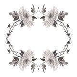Απεικόνιση μελανιού του floral πλαισίου που απομονώνεται στο άσπρο υπόβαθρο Στοκ Φωτογραφίες