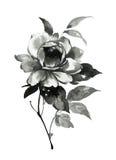 Απεικόνιση μελανιού του peony λουλουδιού Ύφος sumi-ε Στοκ εικόνες με δικαίωμα ελεύθερης χρήσης