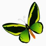 Απεικόνιση μιας ζωηρόχρωμης πεταλούδας Στοκ Εικόνες