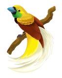 Απεικόνιση πουλιών παραδείσου πουλιών κινούμενων σχεδίων για τα παιδιά Στοκ εικόνες με δικαίωμα ελεύθερης χρήσης