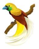 Απεικόνιση πουλιών παραδείσου πουλιών κινούμενων σχεδίων για τα παιδιά Στοκ Φωτογραφία