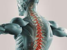 Απεικόνιση πόνου στην πλάτη Στοκ Φωτογραφία