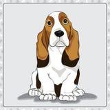 Απεικόνιση σκυλιών κινούμενων σχεδίων απεικόνισης μπασέ-κυνηγόσκυλων διανυσματική απεικόνιση