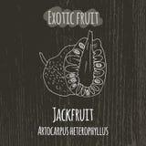 Απεικόνιση σχεδίων χεριών του jackfruit Artocarpus Στοκ Φωτογραφία