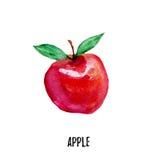 Απεικόνιση της Apple Συρμένο χέρι watercolor στο άσπρο υπόβαθρο Στοκ Εικόνα