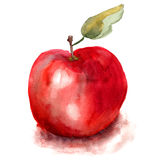 Απεικόνιση της Apple Στοκ Φωτογραφίες