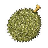 Απεικόνιση της durian-διανυσματικής απεικόνισης Στοκ Εικόνες