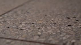 Απεικόνιση του αποσπασματικού δοντιού στο γκρίζο πάτωμα απόθεμα βίντεο