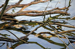 απεικόνιση του δέντρου ρ&io Στοκ φωτογραφία με δικαίωμα ελεύθερης χρήσης