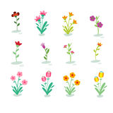 Απεικόνιση του διαφορετικού είδους λουλουδιών Απεικόνιση αποθεμάτων