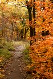 Απεικόνιση του τοπίου το φθινόπωρο στοκ φωτογραφία με δικαίωμα ελεύθερης χρήσης
