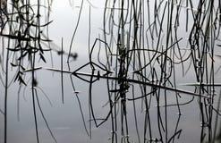 απεικόνιση του ύδατος α&chi Στοκ Εικόνες