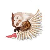 Απεικόνιση: Το κορίτσι και η κουκουβάγια Οι ύπνοι κοριτσιών στα φτερά της μεγάλης κουκουβάγιας Στοκ Εικόνες