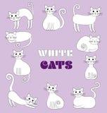 Απεικόνιση των άσπρων γατών Διανυσματική απεικόνιση