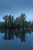 απεικόνιση των δέντρων Στοκ Εικόνα