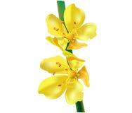 Απεικόνιση των κίτρινων λουλουδιών Στοκ Εικόνες
