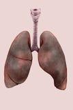 Απεικόνιση των πνευμόνων του καπνιστή Στοκ Εικόνες
