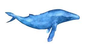 Απεικόνιση φαλαινών Humpback διανυσματική απεικόνιση
