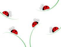 απεικόνιση χλόης ladybugs Στοκ Εικόνες