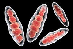 Απεικόνιση Trichophyton μυκήτων Στοκ Εικόνες