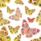 Απεικόνιση Watercolor, ένα σχέδιο των πεταλούδων σε ένα άσπρο υπόβαθρο Στοκ Εικόνες