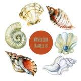 Απεικόνιση watercolor θαλασσινών κοχυλιών Στοκ φωτογραφίες με δικαίωμα ελεύθερης χρήσης