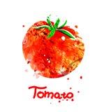 Απεικόνιση Watercolor της ντομάτας Στοκ εικόνες με δικαίωμα ελεύθερης χρήσης