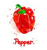 Απεικόνιση Watercolor του πιπεριού Στοκ εικόνες με δικαίωμα ελεύθερης χρήσης