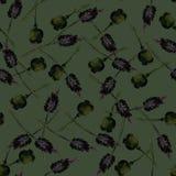 Απεικόνιση Watercolor των παπαρουνών διανυσματική απεικόνιση