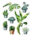 Απεικόνιση Watercolor των τροπικών φύλλων, πυκνή ζούγκλα στοκ εικόνες με δικαίωμα ελεύθερης χρήσης