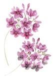 Απεικόνιση Watercolor Στοκ Εικόνα