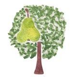Απεικόνιση Watercolorl του δέντρου αχλαδιών με τα φρούτα Στοκ Εικόνα