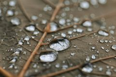 Απελευθερώσεις βροχής Στοκ εικόνα με δικαίωμα ελεύθερης χρήσης
