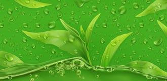 απελευθερώσεις πράσινο τσάι τρισδιάστατο διάνυσμα διανυσματική απεικόνιση