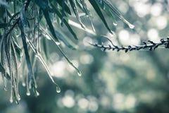 Απελευθερώσεις ύδατος στα φύλλα Στοκ Εικόνες