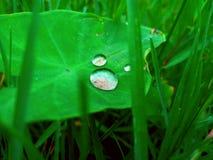 Απελευθερώσεις ύδατος στα φύλλα στοκ εικόνα