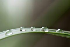Απελευθέρωση βροχής Στοκ Εικόνα