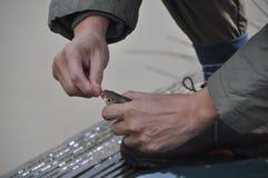 Απελευθέρωση ενός γάντζου αλιείας Στοκ φωτογραφία με δικαίωμα ελεύθερης χρήσης