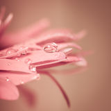 Απελευθέρωση ύδατος στο λουλούδι στοκ φωτογραφία