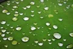 Απελευθερώσεις βροχής Στοκ Εικόνες