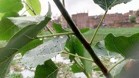 Απελευθερώσεις βροχής Στοκ Εικόνα